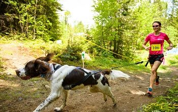 Courir avec son chien, explications
